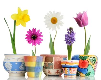 Jaką Doniczkę Wybrać Kwiaty Doniczkowe Ogród I Kwiaty
