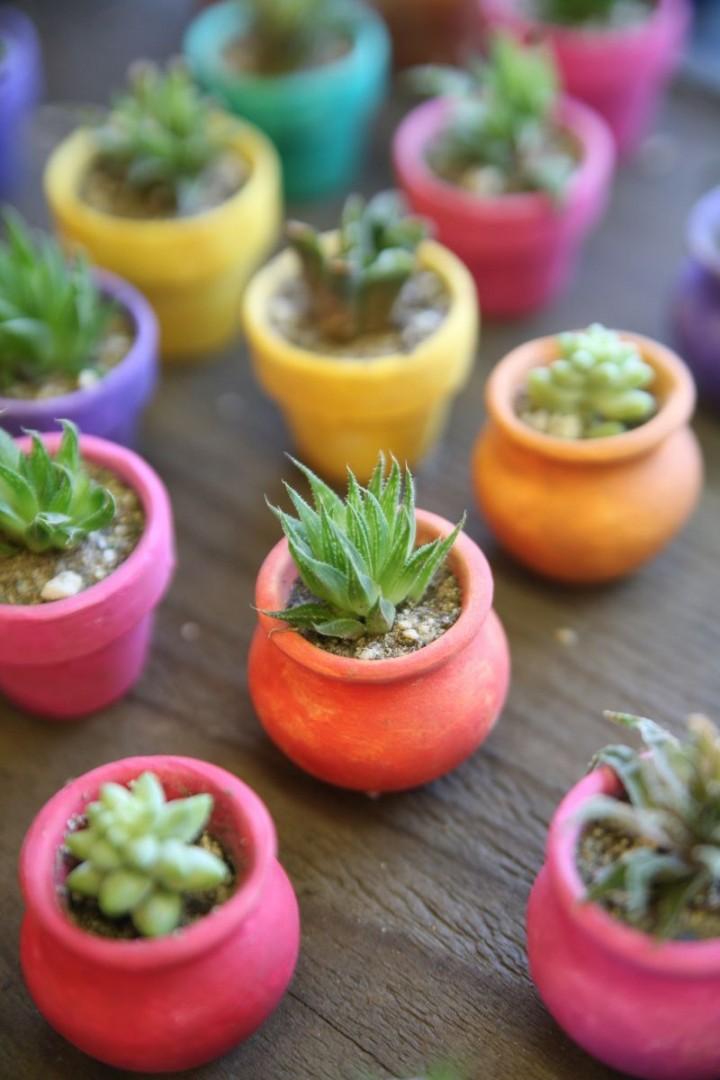 Kaktusy Uprawa I Pielęgnacja Kwiaty Doniczkowe Ogród I