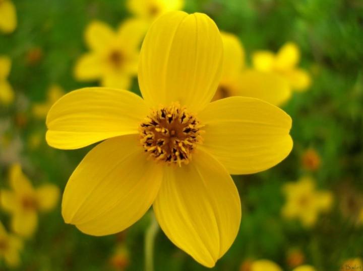 Zdjecie Nr 7 Zwisajace Kwiaty Balkonowe Galeria Kwiaty Doniczkowe Ogrod I Kwiaty Infor Pl