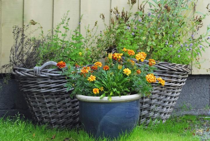 Sadzenie W Wiklinowym Koszu Kwiaty Doniczkowe Ogrod I Kwiaty Infor Pl